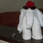 Elefant3 (1 von 1)